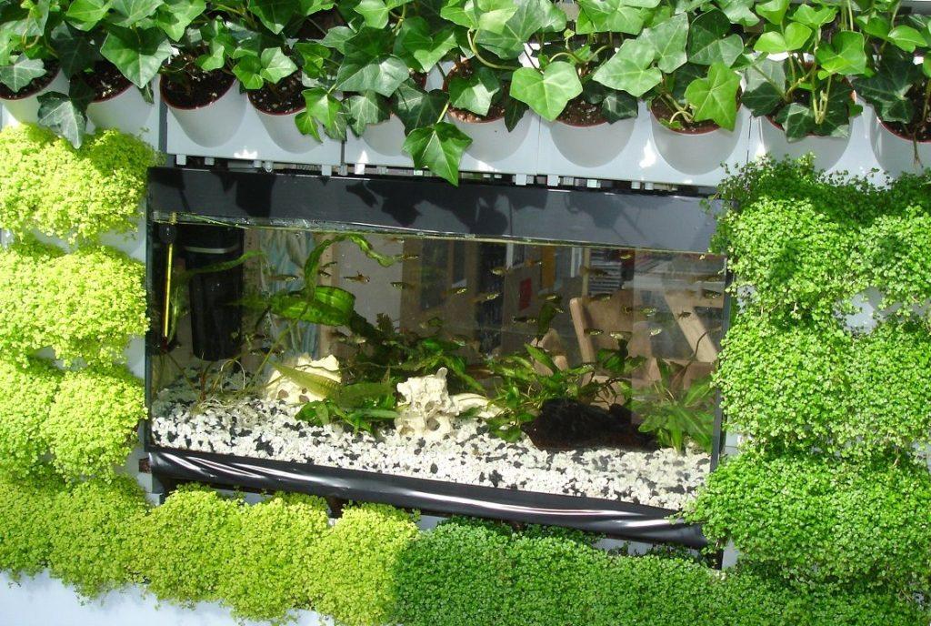 akvárium zabudované vtzv. vertikální zahradě